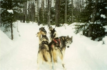 Dog Sledding, photo credit: Lydia Rogers