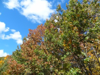 Red and Green foliage against blue sky with clouds