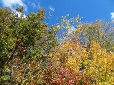 Green, Red, and Yellow Autumn foliage