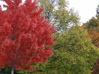 Autumn on Memorial Drive in Cambridge MA