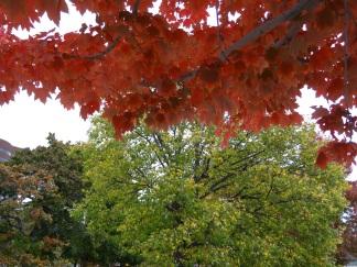 Autumn on Memorial Drive, Cambridge MA